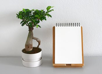 Minimalist Living Tips - Plant & Notepad